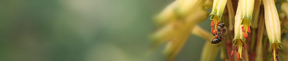 slider-200-bee
